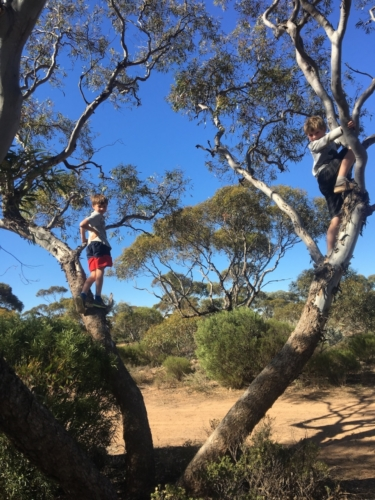 Near Cocklebiddy, a place we quickly had to escape due to the swarming bees!! Travelling Family Australia