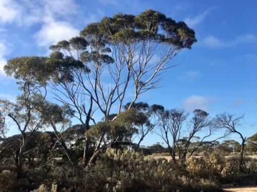 Nullarbor.Travelling Family Australia