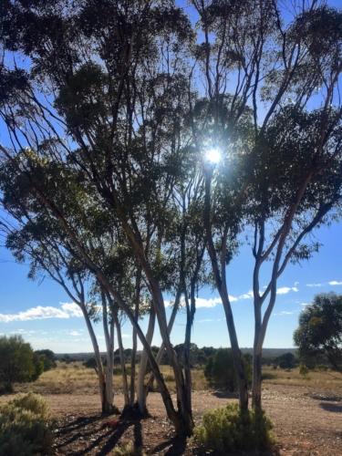 Scenery, crossing the Nullarbor.Travelling Family Australia